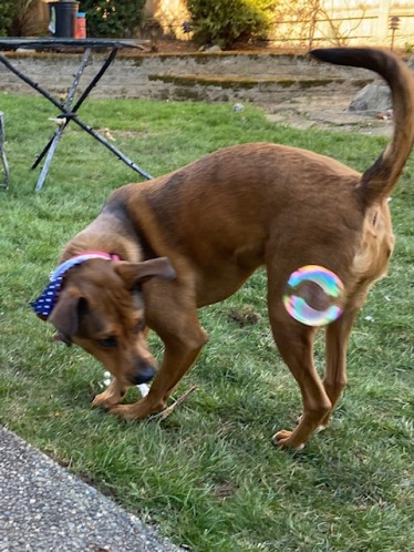 Gunny bubbles